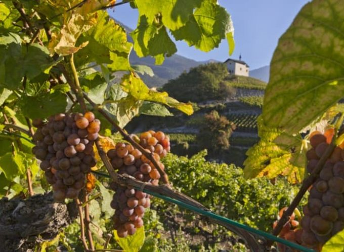 Wine Experiences Valais